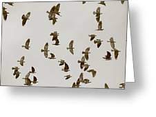 A Flock Of Flying Jackdaws Greeting Card