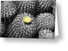 A Flower Among Thorns Greeting Card