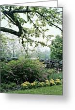 A Flower Bed In Mrs. Frank Audibert's Garden Greeting Card