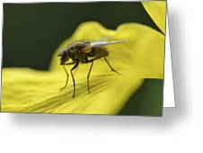A Fly Greeting Card