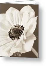 A Focus On The Details Greeting Card