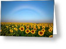 A Fog Bow Over The Colorado Sunflower Fields Greeting Card