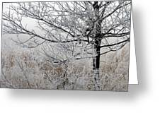 A Foggy Frosty December Morning Greeting Card