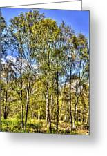 A Forest Glade Greeting Card