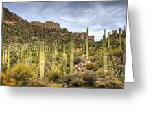 A Forest Of Saguaros  Greeting Card