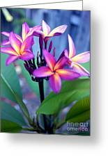 A  Frangipani Tree In Bloom Greeting Card by Steven Valkenberg