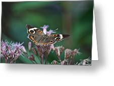 A Friendly Butterfly Smile Greeting Card