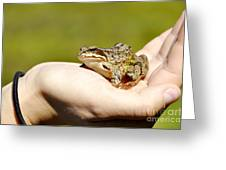 A Frog In The Hand Greeting Card