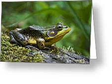 A Frog Is Forever Greeting Card