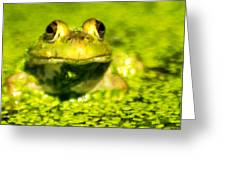 A Frogs Day Greeting Card