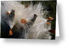 A Froth Of Milkweed Greeting Card