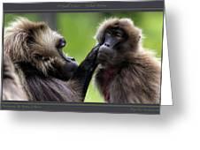 A Gentle Caress   Gelada Baboons Greeting Card