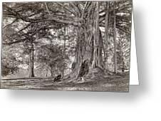 A Gentleman Sitting Beneath A Large Native Tree In British Ceylon Greeting Card