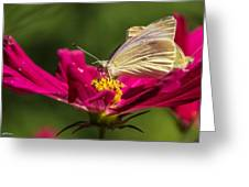 A Georgous Butterfly Macrophotography Greeting Card