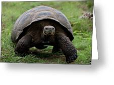 A Giant Tortoise Walks Along The Rim Greeting Card