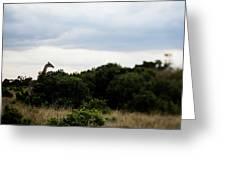 A Giraffe Giraffa Camelopardalis Among Greeting Card