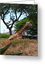 A Giraffe Rests In Honolulu Greeting Card