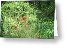A Glimpse Of Poppies Greeting Card