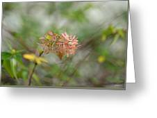 A Glimpse Of Spring To Come Greeting Card