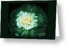 Ornamental Kale Greeting Card