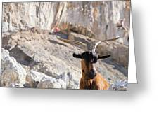 A Goat Hanging Out At The Base Greeting Card