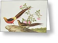 A Golden Pheasant Greeting Card