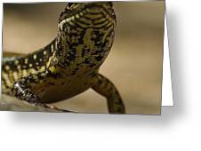 A Golden Skink Greeting Card