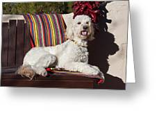 A Goldendoodle Lying On A Garden Bench Greeting Card