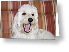 A Goldendoodle Lying On A Lawn Chair Greeting Card