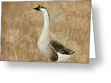 A Goose Is A Goose Greeting Card by Betty LaRue