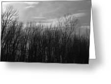 A Grey Point Of View Greeting Card