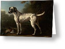 A Grey Spotted Hound Greeting Card