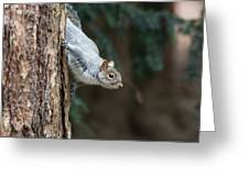 A Grey Squirrel Making It S Way Greeting Card