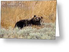 A Grizzily On A Buffalo Carcass Greeting Card