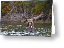 A Grizzly Cub Fishing Greeting Card