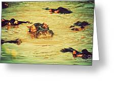 A Group Of Hippos In A River. Tanzania Greeting Card
