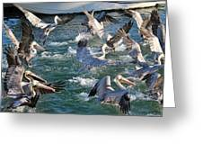 A Group Of Pelicans Greeting Card