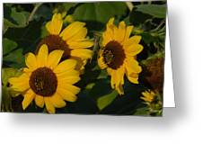 A Group Of Sunflowers Greeting Card