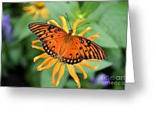 A Gulf Fritillary Butterfly On A Yellow Daisy Greeting Card