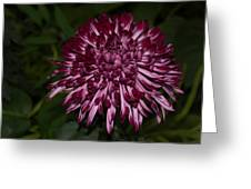A Happy Birthday Wish With An Elegant Maroon And Pink Mum Greeting Card