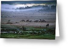 A Heard Of Elk Graze In A Misty Meadow Greeting Card