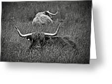 A Highland Cattle In The Scottish Highlands Greeting Card