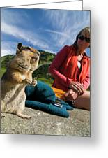 A Hiker Makes Friends With The Local Greeting Card