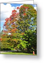A Hint Of Fall Phase 2 Greeting Card