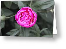 A Hint Of Pink In The Garden Greeting Card