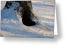 A Hollow In A Tree In Winter Greeting Card