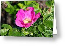 A Hornet And Beach Rose Greeting Card