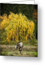 A Horse And A Willow Tree Greeting Card