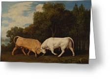 Bulls Fighting Greeting Card