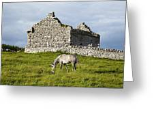 A Horse Grazing In A Field Greeting Card